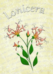 honeysuckle embroiderers background