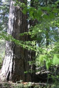 central oregon trail