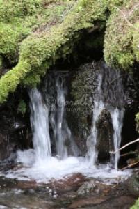 cascades falling in the cascade mountains