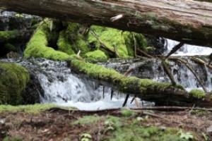 cascades falling under a log