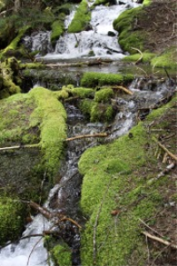 water in the cascade mountains