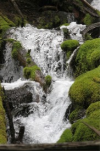 falling water in the cascades