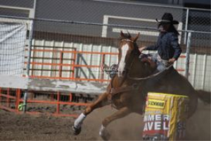 all around horse and rider