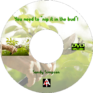 you need to nip it in the bud (mp4)