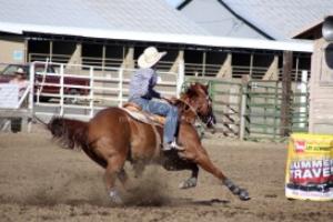 barrel horse in action