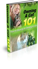 owning a cat - tips on buying and owning a cat