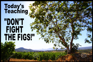 don't fight the figs