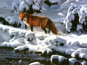 the hunt - fox