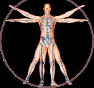 anatomical meditation