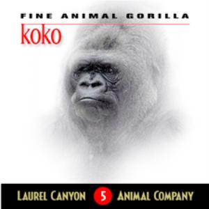 Koko - Fine Animal Gorilla (Album) | Music | Other