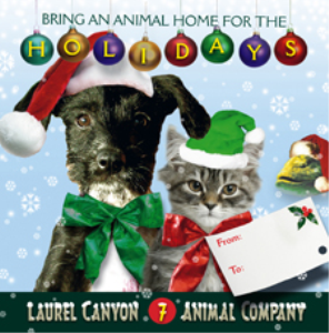 bring an animal home for the holidays