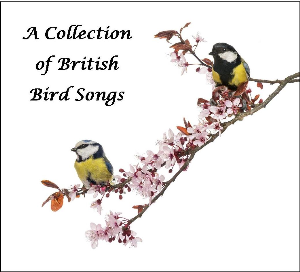 a collection of british bird songs-14 tracks-download