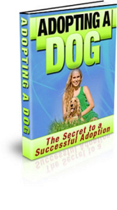 adopting a dog: the secrets to a successful adoption