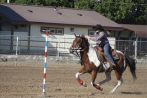 sporting color horse and rider