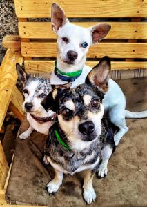 Three Amigos | Music | Other