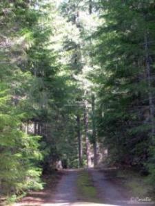 cascade mountain road oregon web