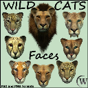 WILD CATS - Faces | Photos and Images | Digital Art