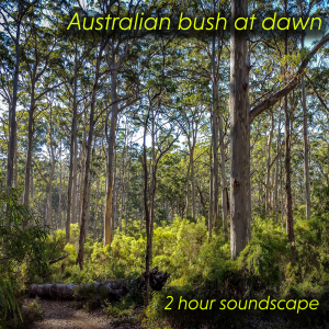 australia bush at dawn soundscape