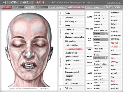 Second Additional product image for - ARTNATOMYA (Español - Sistema Windows)