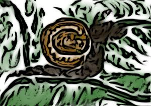 snail in garden