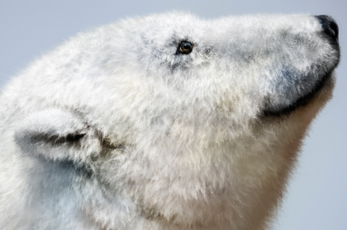 Third Additional product image for - Realistic FUR. The Brush Set for painting realistic fur in CLIP STUDIO PAINT