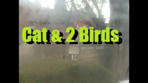 cat & birds