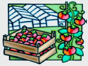 australia greenhouse vegetable statistics- 2015
