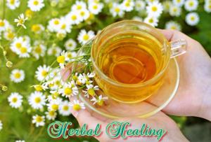 herbal healing for everyone the powerful healing properties of herbs