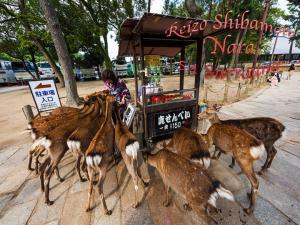 reizo shibamoto nara 5.1 surround
