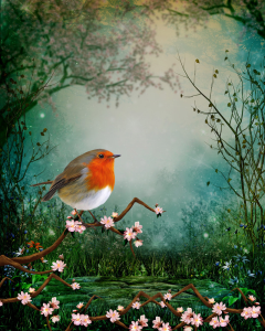robin sitting on a cherry tree branch