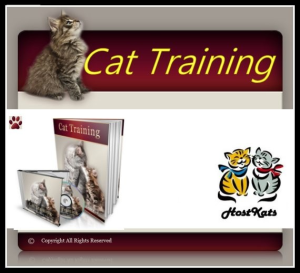 cat training!