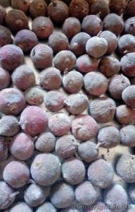 fruit ficus racemosa