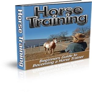 beginner's guide to horse training