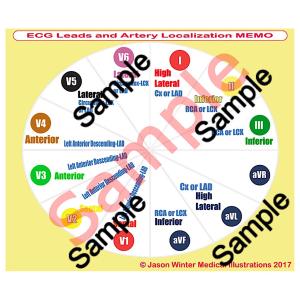ecg leads and arteries (pdf) file