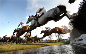 the cheltenham horse racing system
