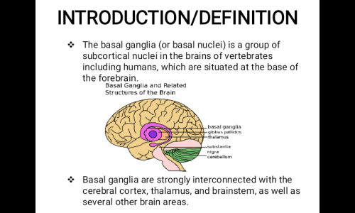 First Additional product image for - Professional Powerpoint Presentation On The Basal Ganglia