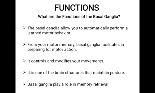 Third Additional product image for - Professional Powerpoint Presentation On The Basal Ganglia