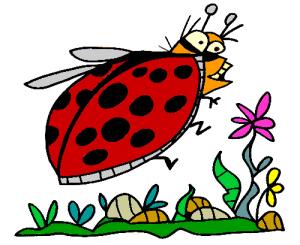 Colored Ladybug Illustration   Photos and Images   Animals