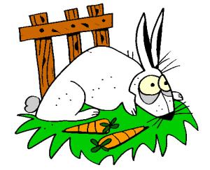 colored rabbit illustration