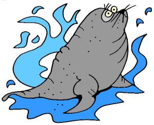 colored sea lion illustration