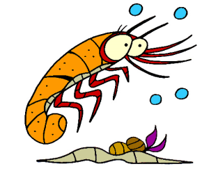 Colored Shrimp Illustration | Photos and Images | Animals