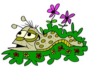 colored slug illustration