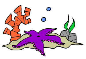 Colored Starfish Illustration | Photos and Images | Animals