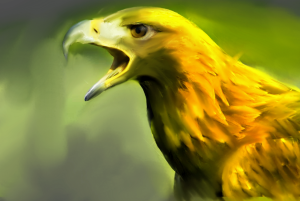 Yellow Hawk | Photos and Images | Digital Art