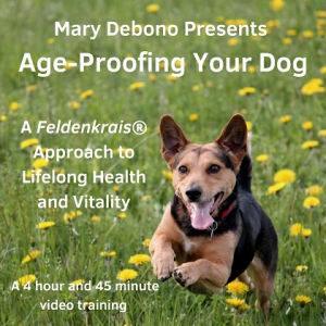 age-proofing your dog video