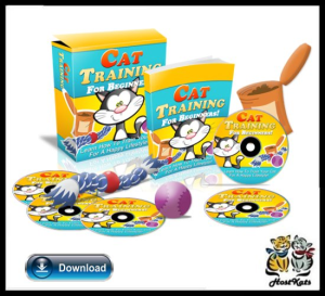 cat training for beginners html and psd template