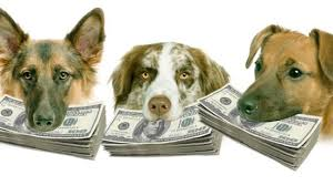 Budgeting a grooming salon | eBooks | Pets