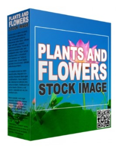 plants and flowers stock images (royalty free)