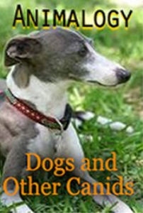 animalogy: dogs & other canids
