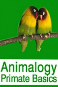 animalogy: primate and pigeon basics